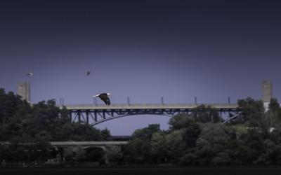 Hamilton Eagle