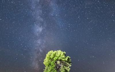 F150 Tree